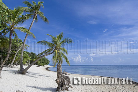 tropical palm tree leaning over caribbean white sand beach stock photo