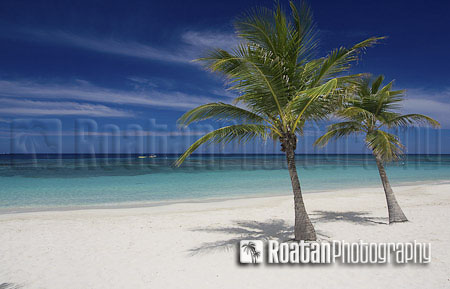 Two_palm_trees_on_tropical_white_sand_beach_stock_photo